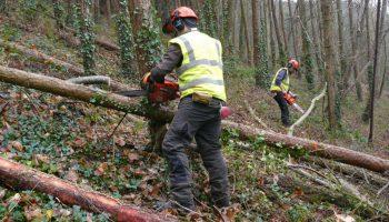 woodland_management-edited